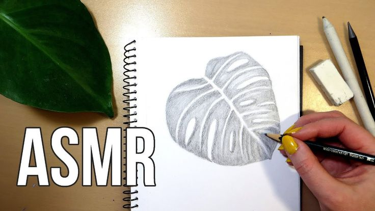 ASMR Pencil Drawing - No Talking || Monstera Leaf Drawing. ASMR pencil drawing, no talking. I'm sketching a Monstera Deliciosa leaf with different pencils and shading and blending. I'm drawing the leaf in my sketchbook, from life, in real time.
