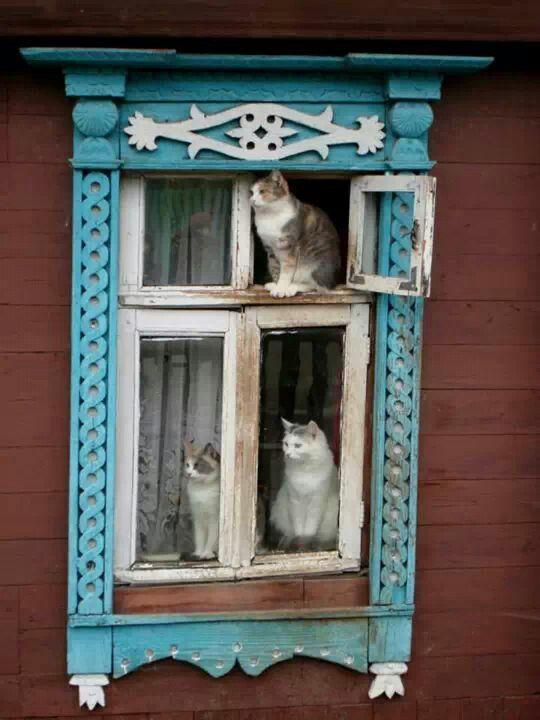 Lovely window trim. (≡・x・≡)