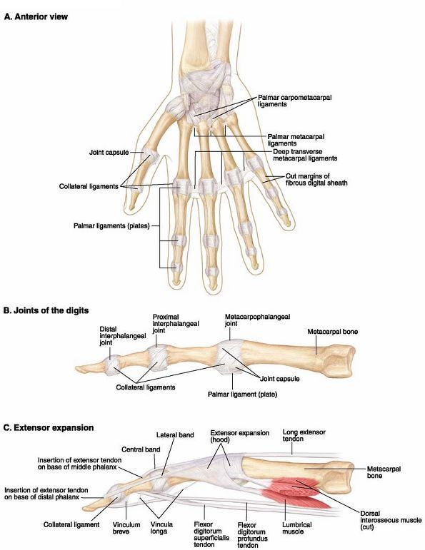 The 122 Best Sdp Tendons And Forces Images On Pinterest Robot
