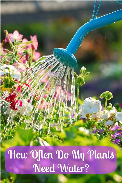 24 best Beginners...How to plant a beautiful garden images on ...