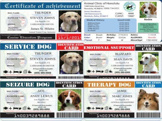 Service Dog Id Card Template Inspirational What Is Service Dog Id And Why You Need Service Dog Id Dog Identification Dog Id Service Dogs