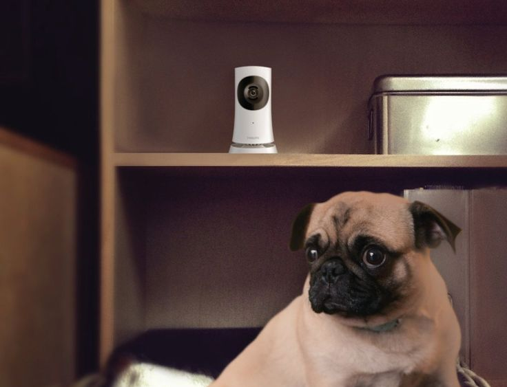 Use your iPhone/iPad to keep an eye on your home from anywhere and everywhere with the In.Sight Wireless HD Home Monitor by Philips.