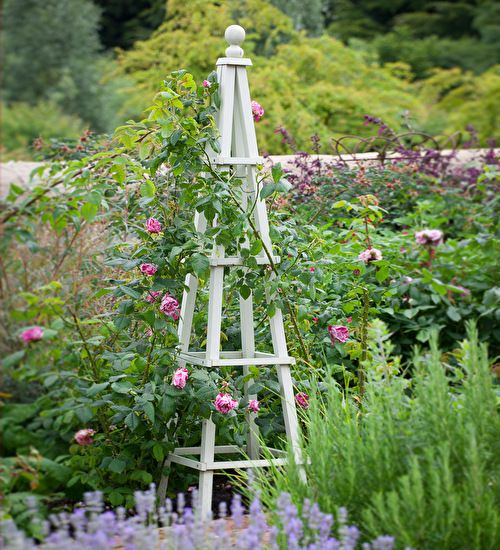Our hardwood obelisks are very long-lasting and are good for compact climbers in beds or borders.