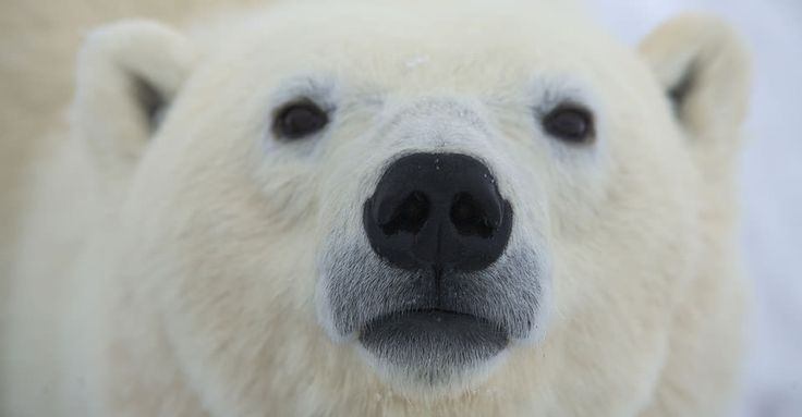 Don't think of the white bear.    If you're like most people, you are now p...