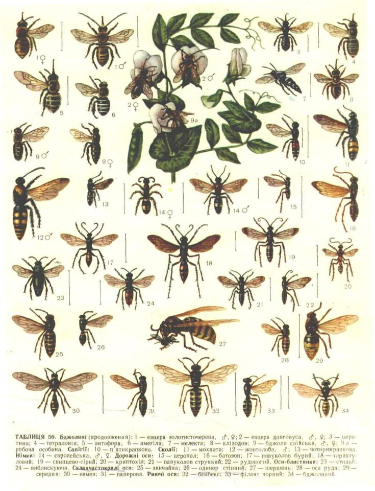 Определитель насекомых с картинками этой истории