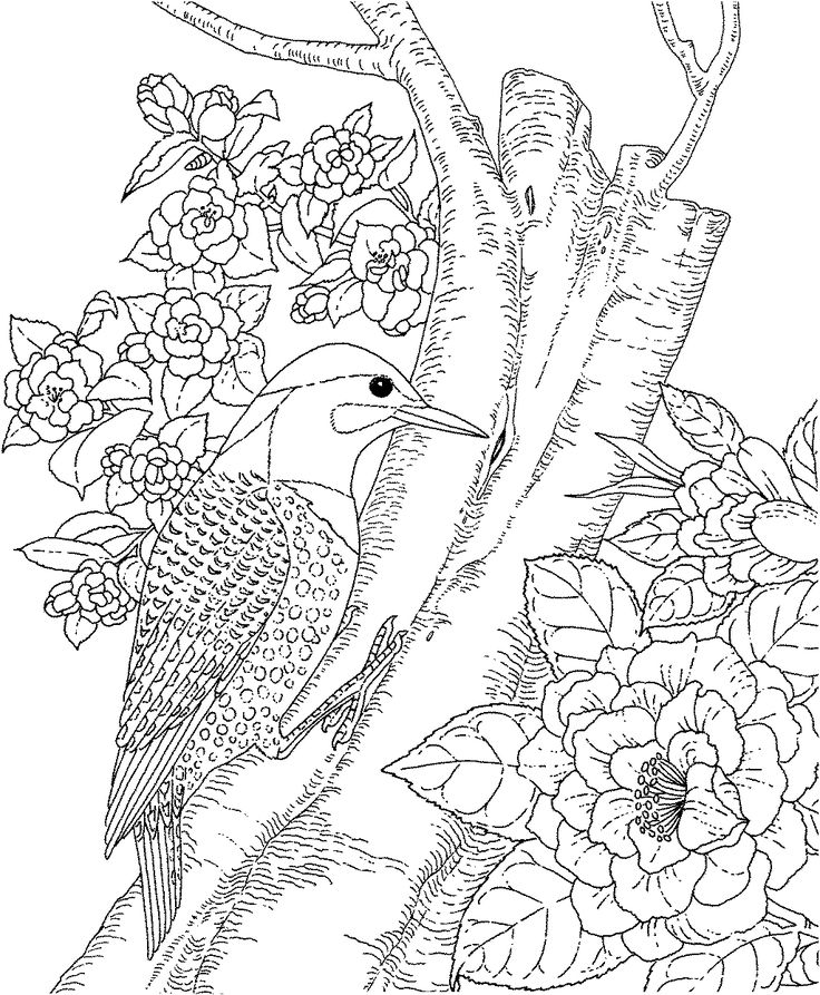 Genius image with free printable coloring pages for adults advanced flowers