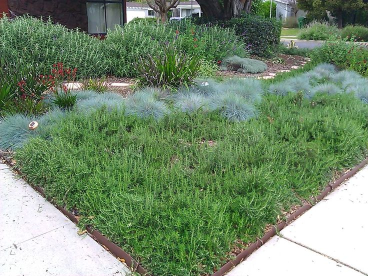 smother and replace your lawn with mulch zero scape lawn and yards - Garden Ideas To Replace Grass