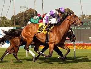 Quiet Oasis(2008)(Filly) Oasis Dream- Silent Heir By Sunday Silence. 4(C)x5(C) x4(F) To Northern Dancer, 5(C)x5(C) To Never Bend. 14 Starts 4 Wins 2 Seconds 2 Thirds. $282,379. Won 1M Royal Heroine Mile S(G2T), 1M Wilshire H(G3T), 2nd 1 1/8M Gamely S(G1T), 6 1/2F La Habra S(G3T), 3rd 1 1/8M Santa Ana S(G2T).