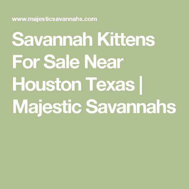 Savannah Kittens For Sale Near Houston Texas | Majestic Savannahs