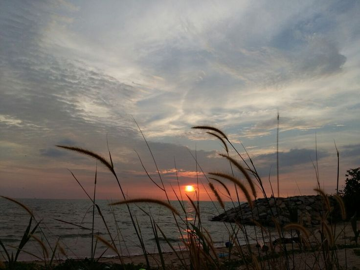 lalang dan matahari terbenam ~ ali