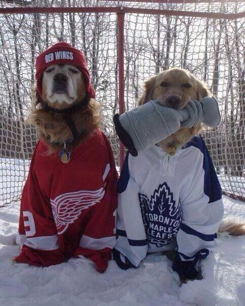 my dogs but they would be wearing both hawks jerseys or a hawks jersey and whatever team my husband likes if its not the hawks