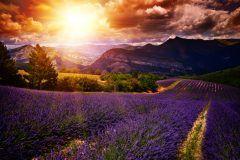 Lavendel Blütezeit