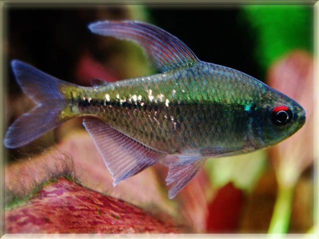 1000 images about aquarium fish on pinterest angelfish for Petsmart fish guarantee