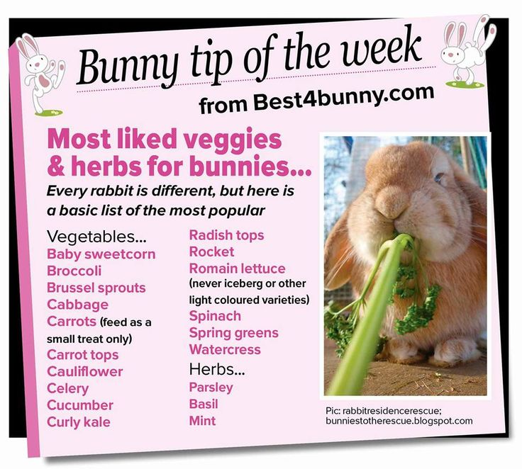 Bunny tip of the week - Most liked vegetables and herbs.  www.best4bunny.com