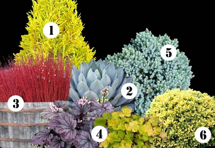 color for shade garden   ... landscape plan this year & ideas for year-round color in your garden