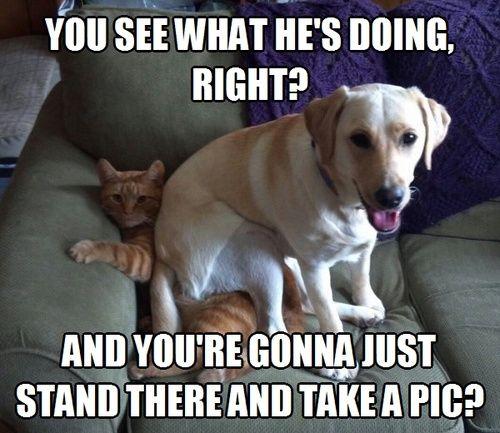 E o gato fica-se??