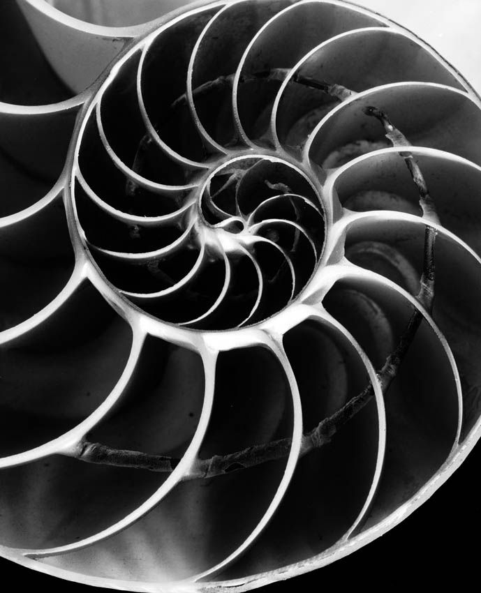 Andreas Feininger - The spiral. It's in all if life. In all of the universe. And in ancient cultures. And it's lovely.