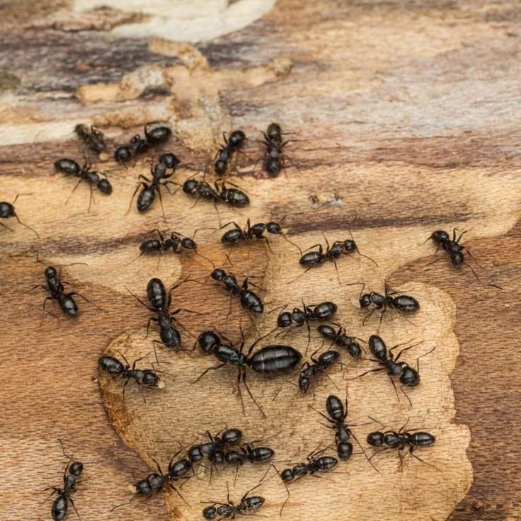 How to get rid of ants in the home and yard in 2020