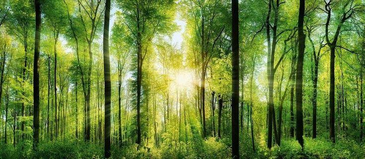 EUROGRAPHICS Deco Panel »Green Sunshine«, 115/50 cm für 45,99€. Motiv: Green Sunshine, Trendige Wanddekoration, Hochwertiger Bildträger bei OTTO