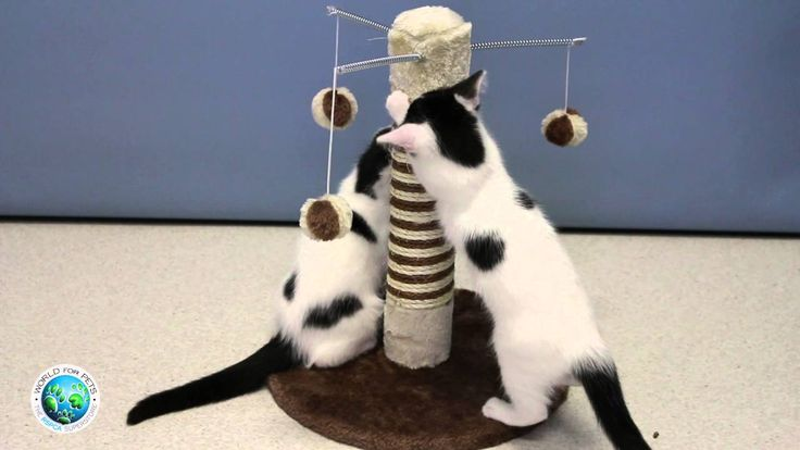 Cutest kittens scratching and playing with 'Cat Pole Bella'