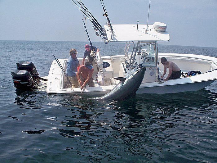 Best Boat Images On Pinterest Boating Yachts And Fishing Boats - Blue fin boat decals