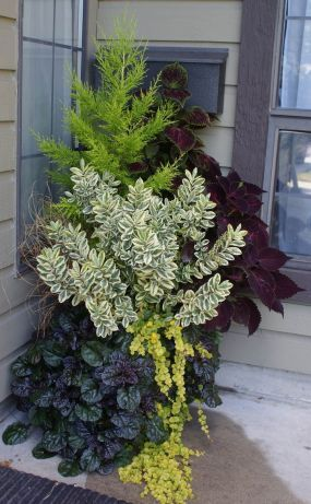 Container garden; mix of colors and textures.