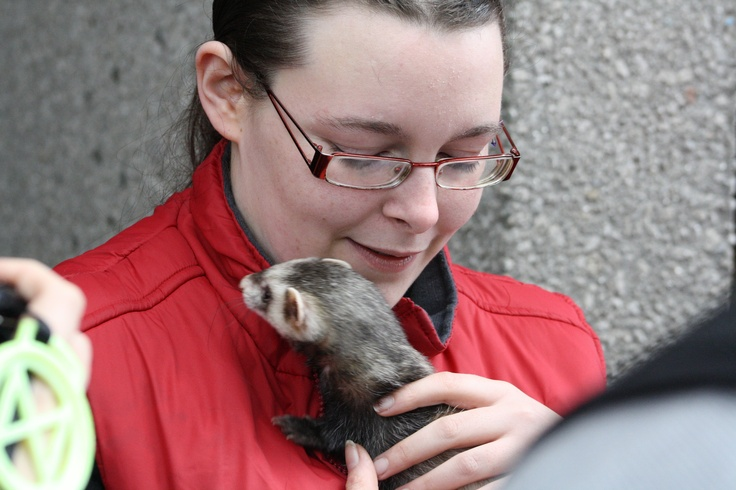 Kayleigh's Sanctuary for Exotic pets, Cork City