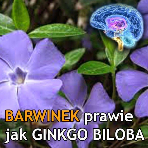 Barwinek (Vinca minor) poprawia krążenie mózgowe i pamięć  http://dolinaziol.blogspot.com/2014/05/barwinek-vinca-minor-poprawia-krazenie.html  barwinek Pobudza krążenie krwi, rozszerza naczynia krwionośne, poprawia przepływ krwi do tkanek. Zmniejsza niepokój, łagodzi bóle głowy i szum w uszach. dzięki tym właściwością można go stosować w celu zapobiegania przedwczesnemu starzeniu się komórek mózgowych.