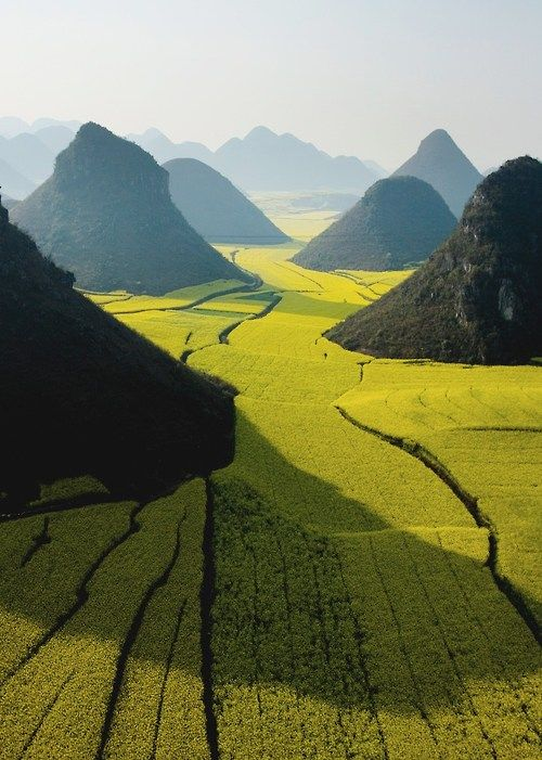 Blooming fields of rapeseed plants weave around hills near Luoping in Yunnan Province, China, by George Steinmetz.