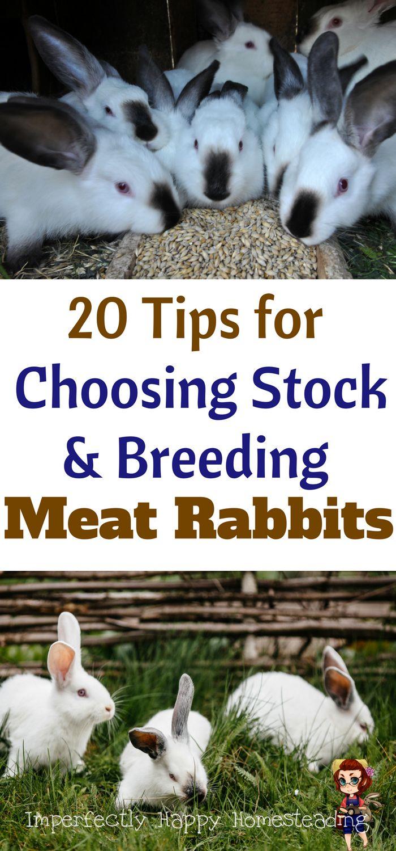 614 best rabbits images on pinterest meat rabbits raising