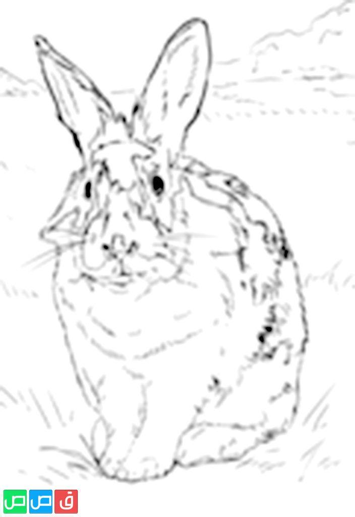 رسم ارنب للتلوين Black And White Rabbit White Rabbits Humanoid Sketch