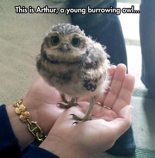 Excuse Me, Owl Be Petting Him Forever  // funny pictures - funny photos - funny images - funny pics - funny quotes - #lol #humor #funnypictures