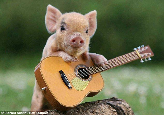 Rock pig: This little fellow is the envy of his mates @Amanda Fletcher