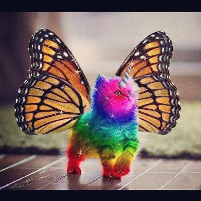 47 best Butterfly images on Pinterest   Butterflies ...