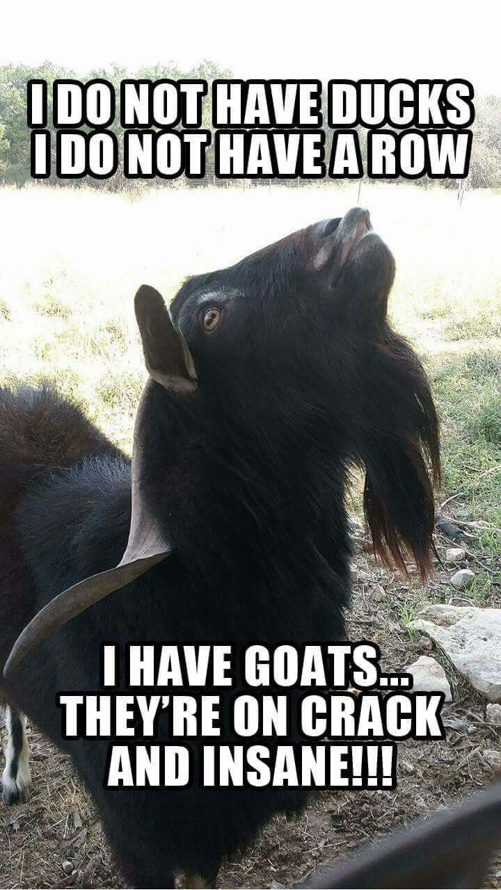 #ajj For the love of goats