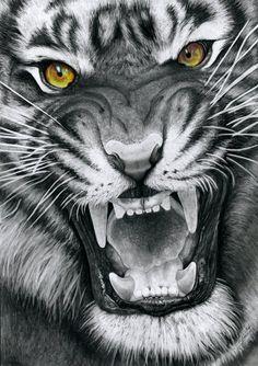 Dies ist eine Zeichnung meines ersten Tigers, der meiner Meinung nach einer der schönsten …   – Bilder