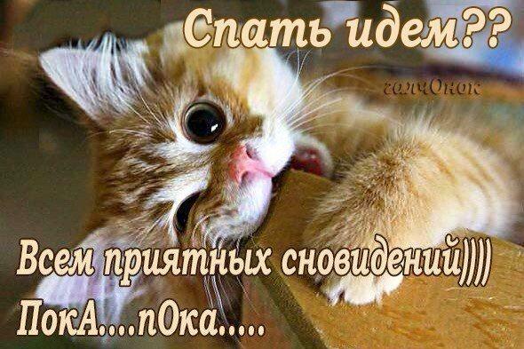 От души,для друзей ! | Смешные мемы о кошках, Смешные ...