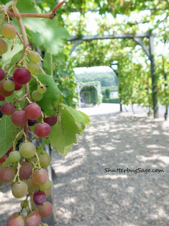 Vine-covered walkways at Chateau de Villandry, Loire Valley, France