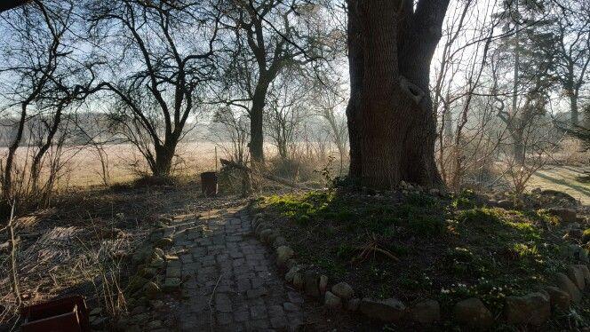 Ye old tree