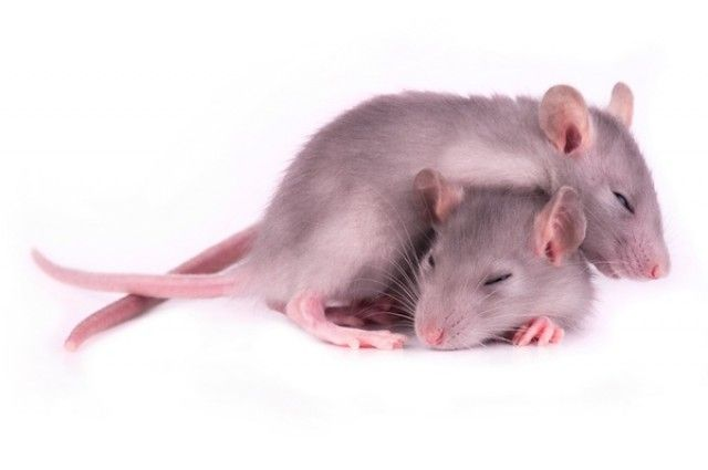 Sleep Debt Shows Up in Your Blood | IFLScience