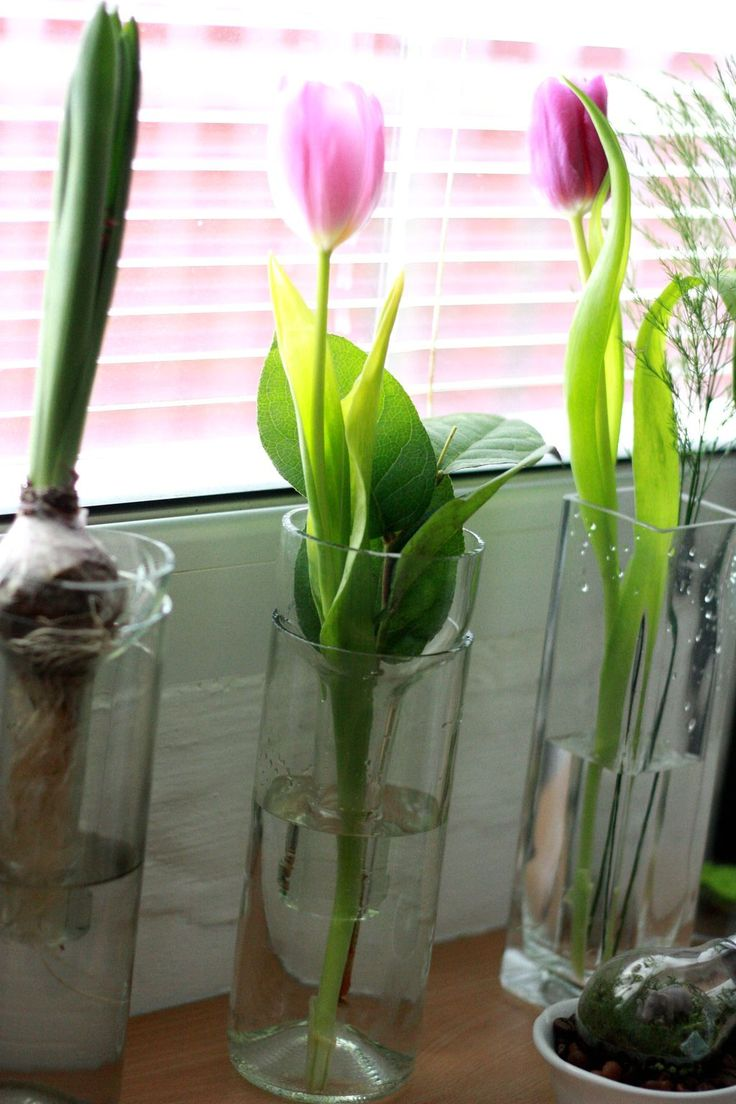 my favourite tulips