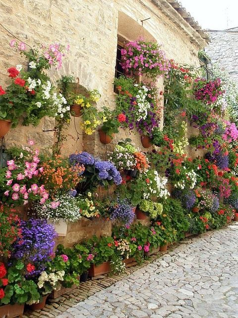 When there is no space for a garden on the ground, plant up. So lovely against the stone of the wall.