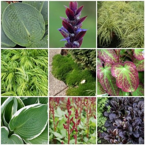 Shady Groundcover palette 1. Blue Hosta, 2. Ajuga reptans, 3. Carex 'Evergold', 4. Variegated grass sea, 5. Groundcover #5, 6. Epimedium, after the rain, 7. Hosta 'Francee' 01, 8. Astilbe chinensis 'Vision in Red', 9. Groundcover