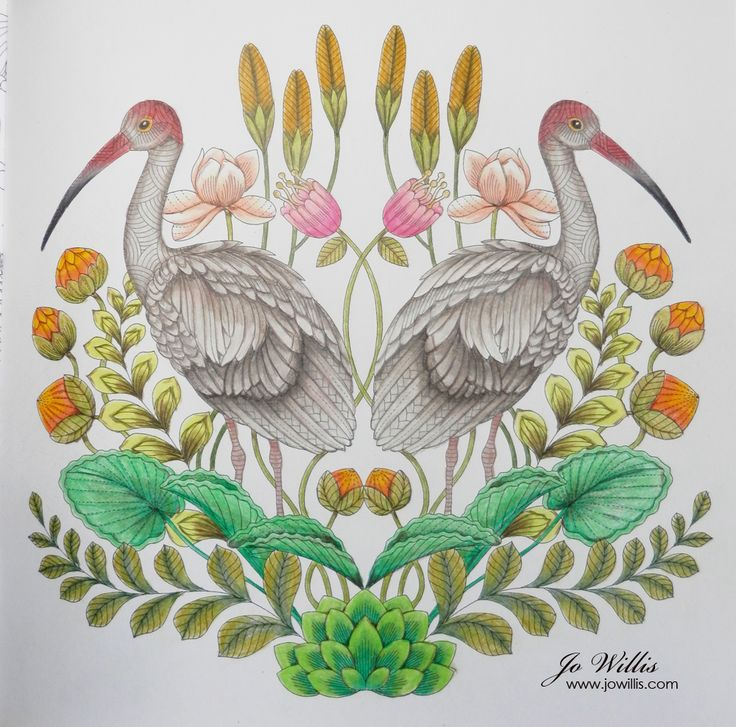 Its A While Since I Coloured Millie Marotta Drawing So Last Night Sat Down And Completed This One Of Ibises From Tropical Wonderland