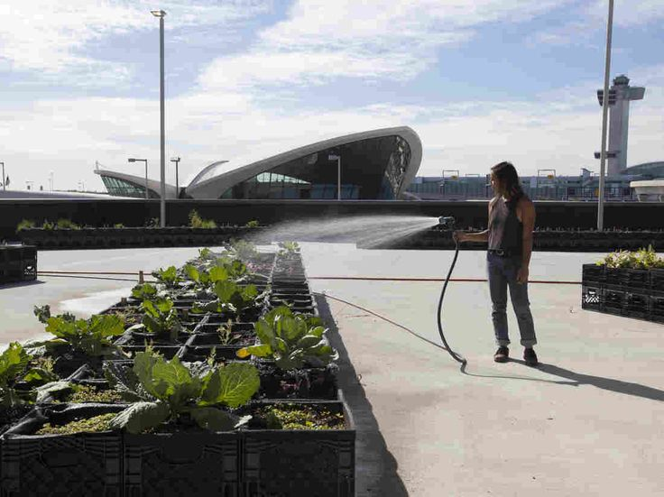 'Farm To Air'? Why JetBlue Is Farming At A New York Airport