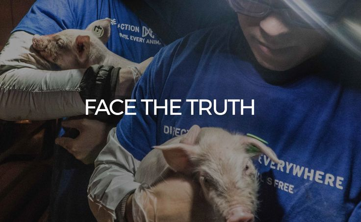 Animal rights protest at Costco! Direct Action Everywhere alleges that a pig farm supplier to Costco is torturing pigs with rampant cramped conditions, starvation, dead and dying piglets piled on t…