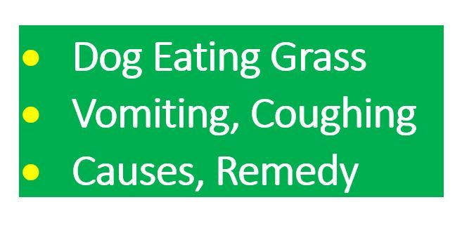 Dog Eating Grass Frantically And Vomiting Yellow Bile White Foam Remedy Dogs Eating Grass Dog Eating Dog Coughing