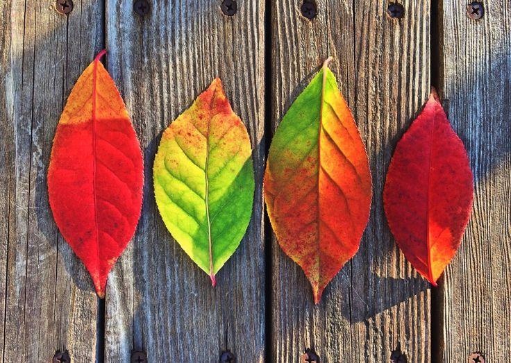Quell'autunno che profuma di funghi e le passeggiate nei boschi