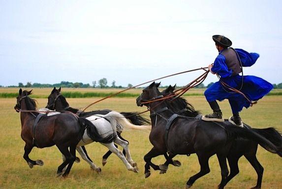 Hungarian horse antics