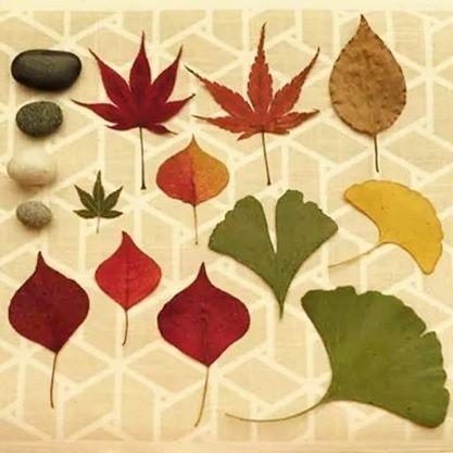 Lembranças do outono no Japão